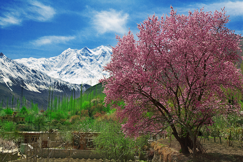 Cherry Blossom trip to Hunza Valley